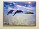 """Фотокартина """"Дельфины""""."""