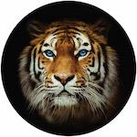 Самоклейка тигр